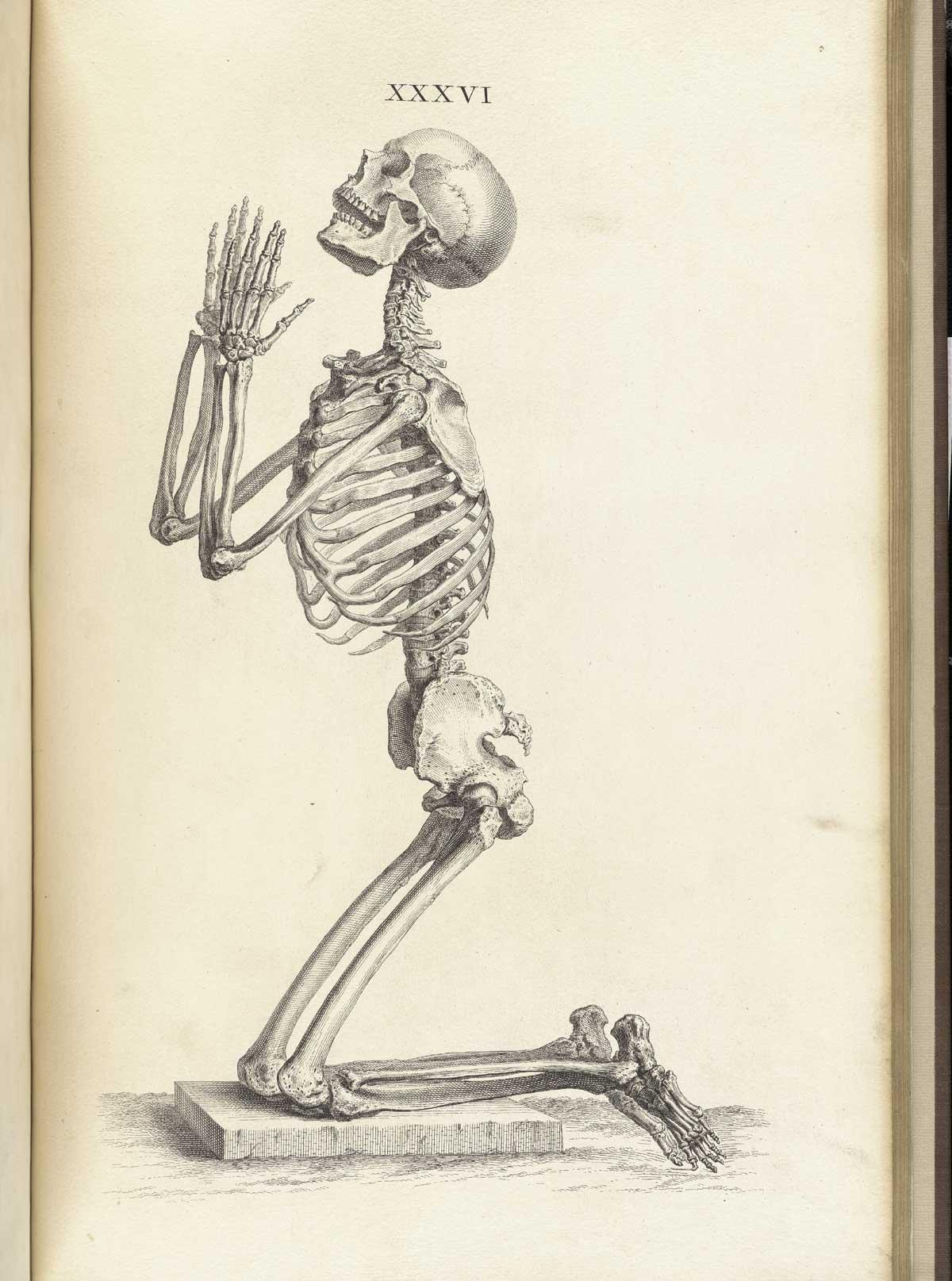 Древние книги по анатомии.